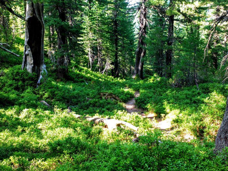 lush forest floor