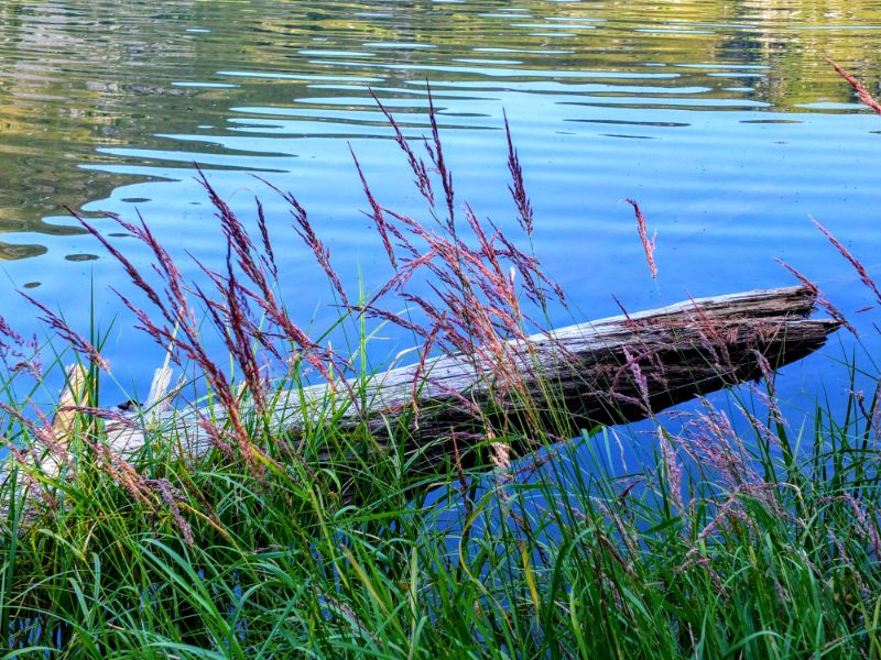 grass and log