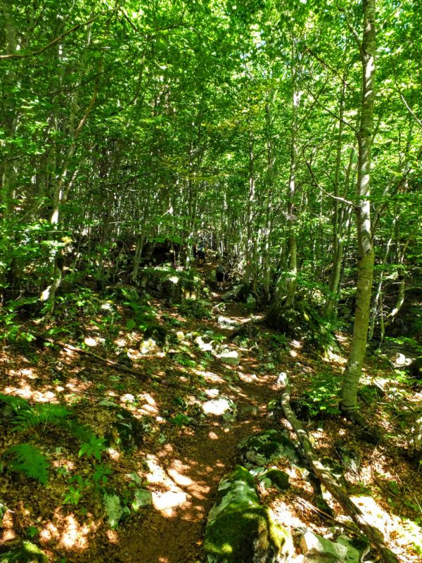 The route ascends through dense beech forest