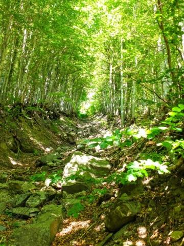 steep ravines cut the mountainside