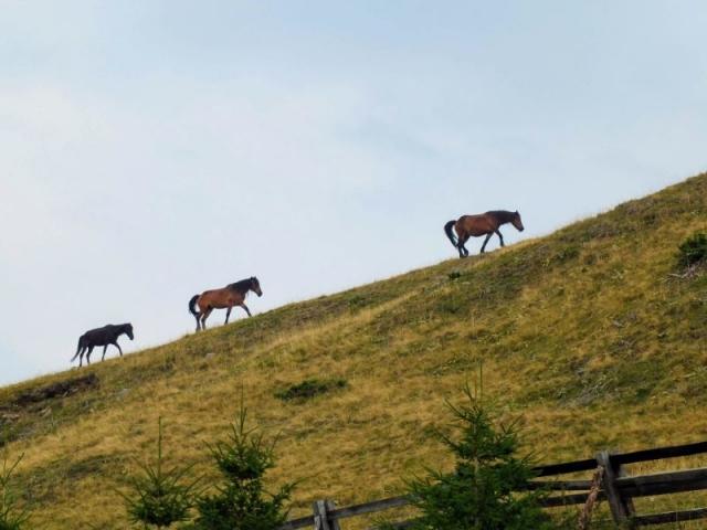 horses on the ridge