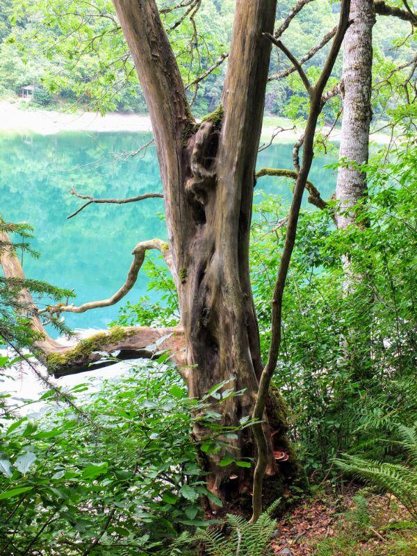 hiking along Biogradska Jezero