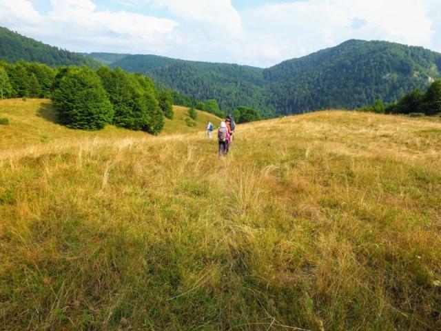 crossing a meadow