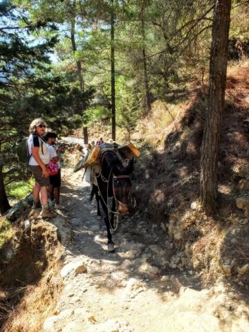 mule heading up