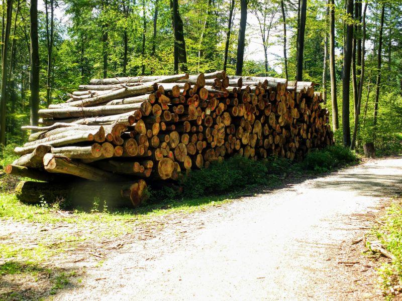 timbering