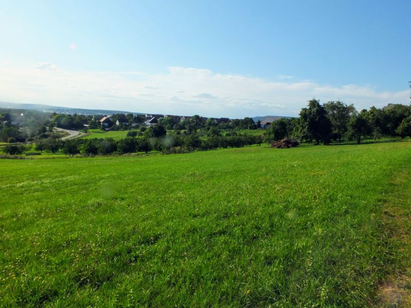Ehrenberg view