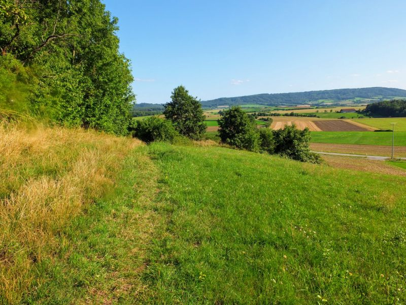 pathway across meadow