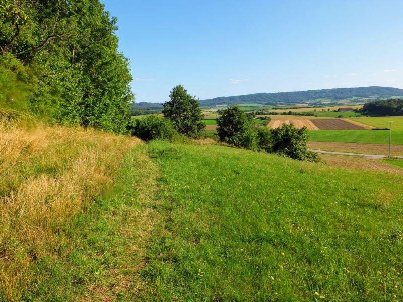 pathway across meadow