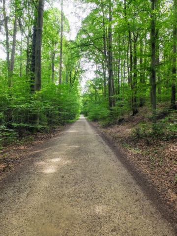 up into the forest above Reuth