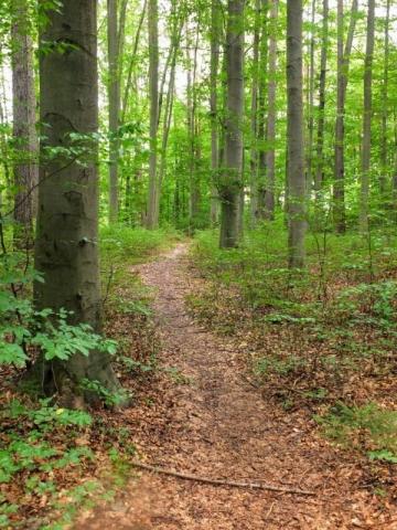 Kellerwald pathway