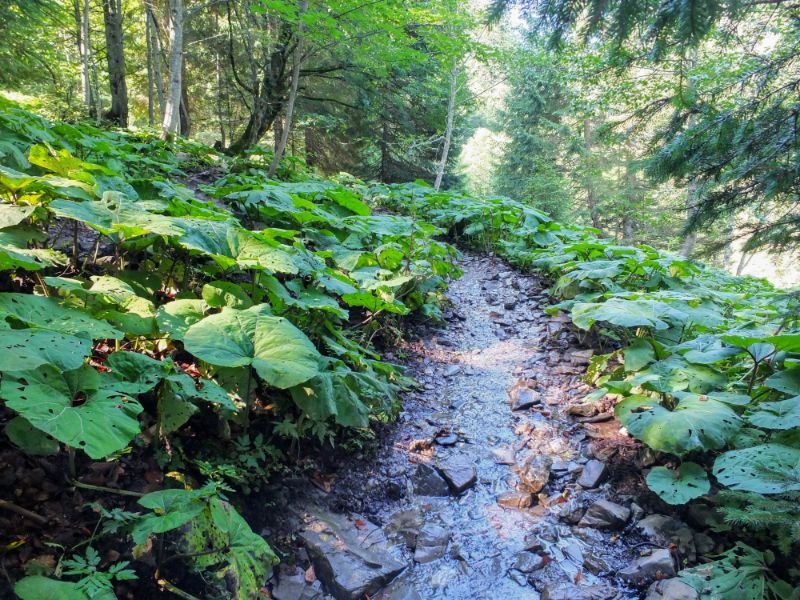 stream and trail are one