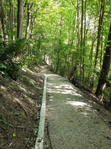 forested walkway