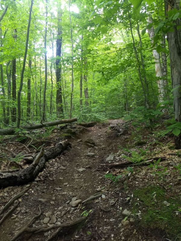 trail - image by Ketra Cameron