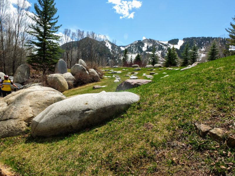 Aspen hillside
