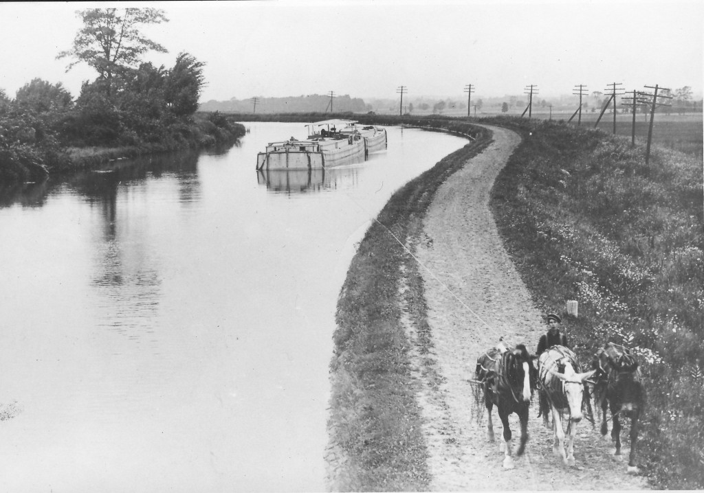 old photo of mule team towing a barge
