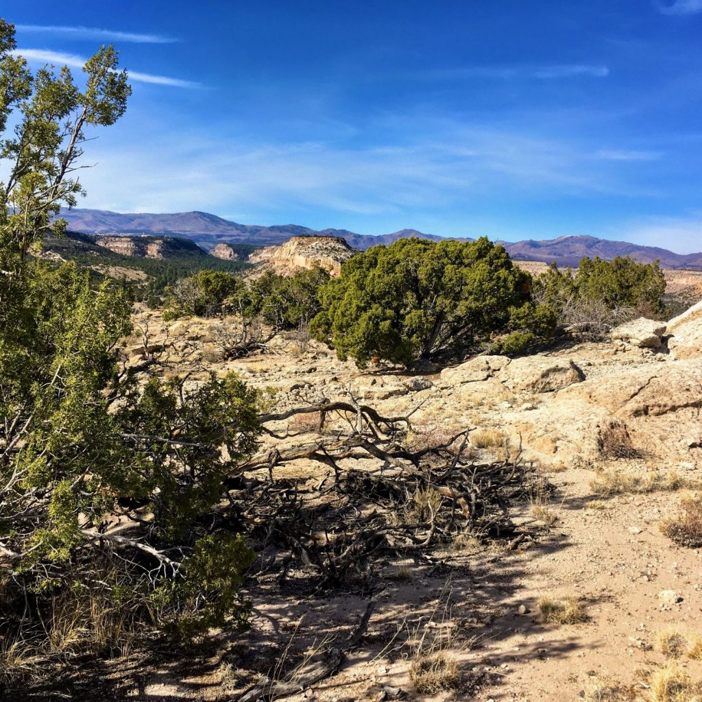 Los Alamos Canyon floor
