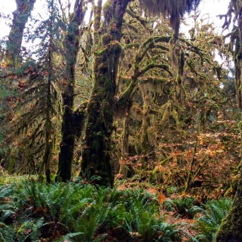 mossy ferny