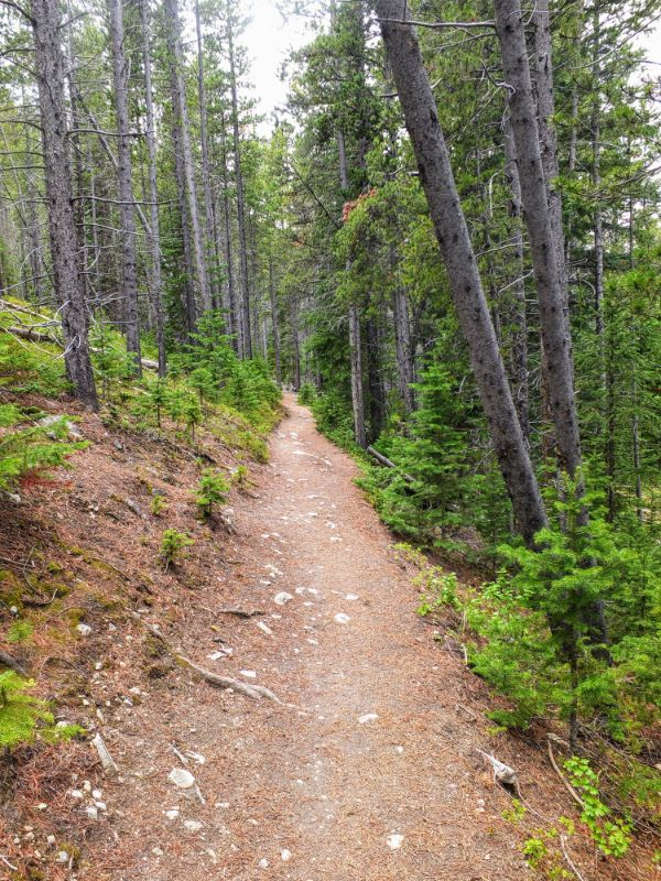 sometimes the trail is on a steep hillside