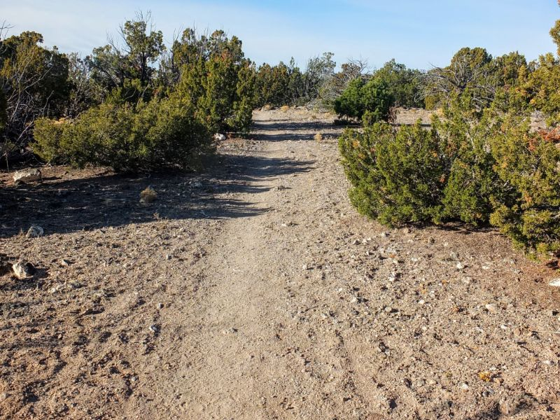 Canyon Rim Trail