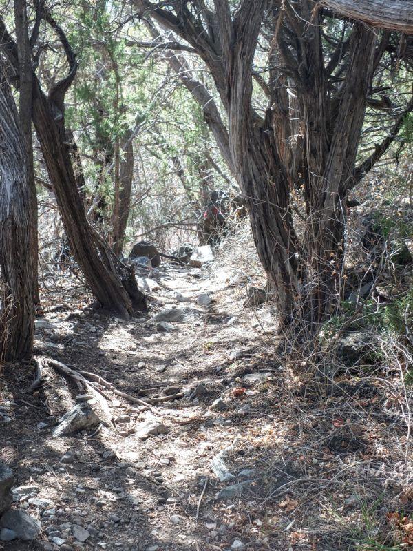 River Trail through bosque