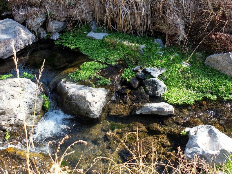 Pajarito Creek