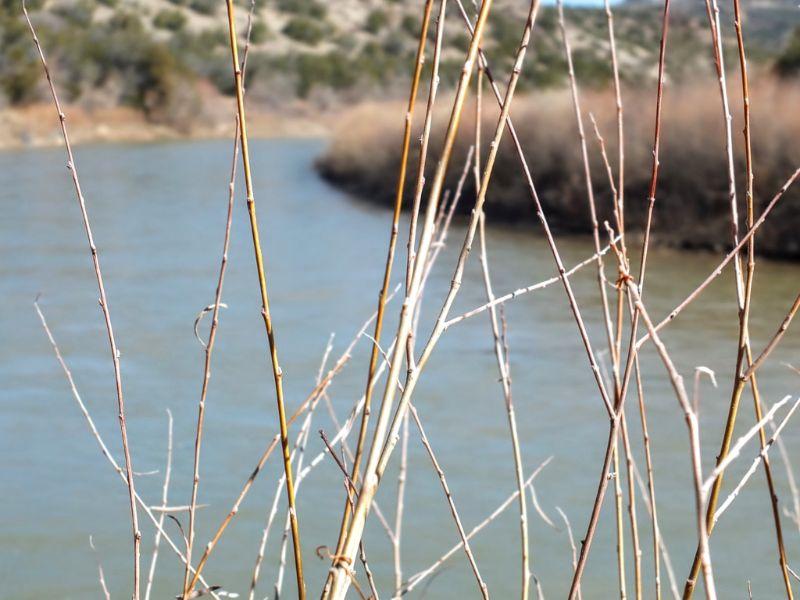 down on the Rio Grande