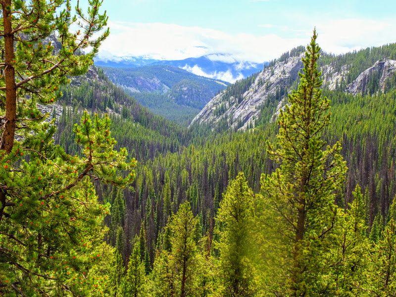 Beartooth View