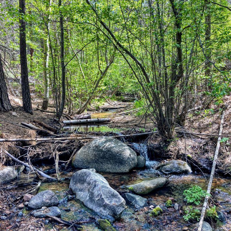 Tesuque Creek