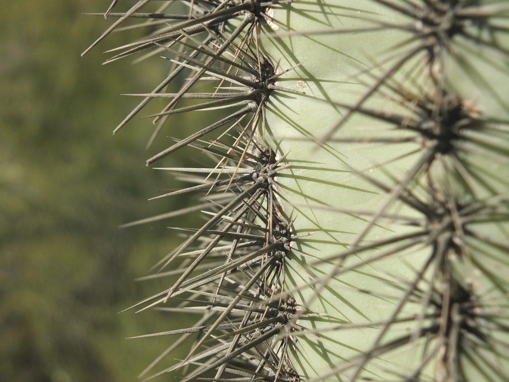 CactusLeague - DSCF7342.jpg