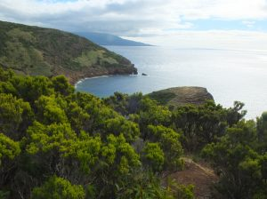 view from top of Monte da Guia