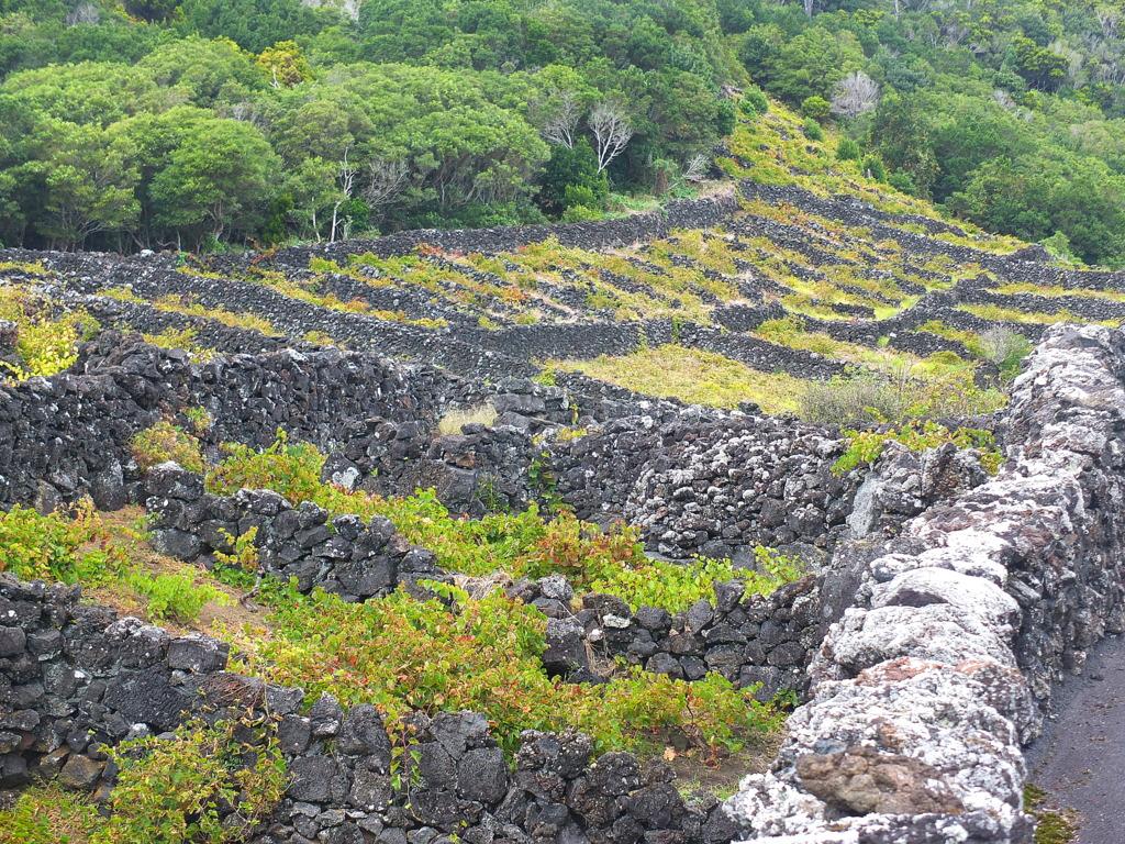 Wine Corrals