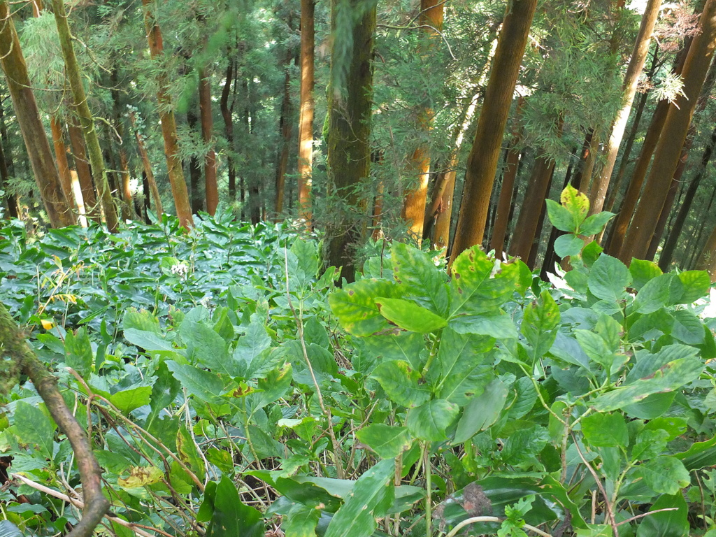 Dense forest along trail