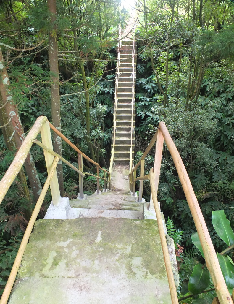 steps to bridge